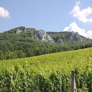 Vinařství Červinka